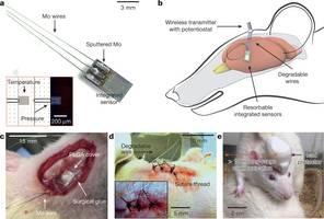 Nanosensoren smelten in hersenen
