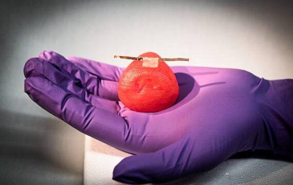 Onderzoekers 3D-printen levensechte kunstmatige oefenorganen