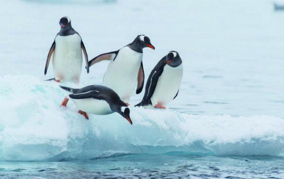 Succesvol innoveren:  breng de pinguïns in beweging