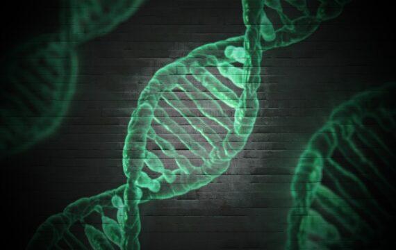 VKGN stapt naar IGJ over betrouwbaarheid DNA-test