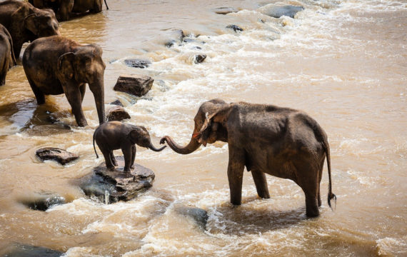 Over olifantenpaadjes, veelplegers en afschuifsystemen